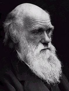 Charles Darwin circa ~1865. Example of a long beard  http://www.artofmanliness.com/2008/11/02/20-manliest-mustaches-and-beards-from-facial-hair-history/?onswipe_redirect=no