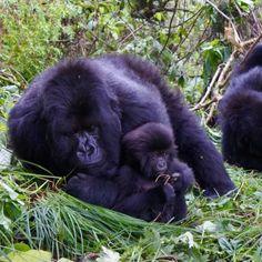 An Instagram Tour of Rwanda: Visit the Gorillas