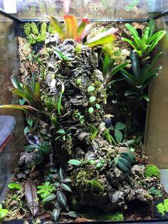 Vivarium On Pinterest Terrarium Reptile Room And Dart Frogs