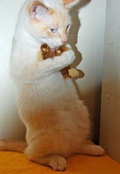 "#cat    ""my precious"""