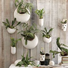 Want these to hang on the outside of my house. (West Elm, $19-69) Notice baby staghorns and mini-orchids.