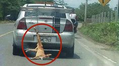 Prosecute driver from Ecuador that dragged helpless dog behind car!   YouSignAnimals.org