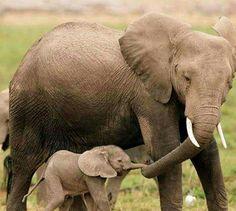 Mamá y bebé elefante