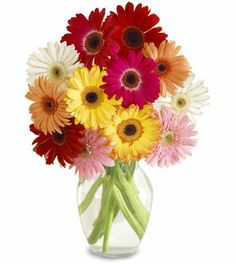 We deliver flowers vietnamese wide, safely and securely, with our quality network of hand picked vietnamese.