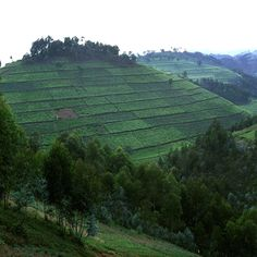 Beautiful Rwanda: I will return someday to get back the piece of my heart that was left there...