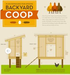 How to build your own Backyard Urban Chicken Coop. Find Plans and instructions here!