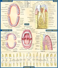 40 best dental things images on Pinterest | Dental health, Dental ...