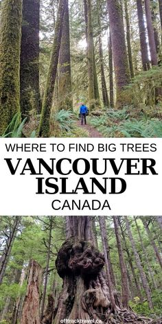Discover 13 places to see magnificent big trees around Vancouver Island, British Columbia, ranging from magical old growth groves and remote valleys to coastal hiking trails and scenic campgrounds What A Beautiful World, Beautiful Places To Travel, Cool Places To Visit, Canadian Travel, Visit Canada, Big Tree, Best Hikes, Vancouver Island, Winter Scenes