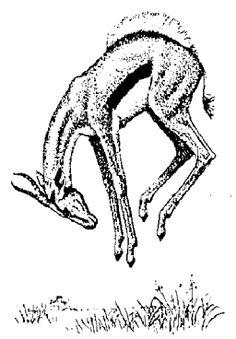 stotting gazelle art - Google Search