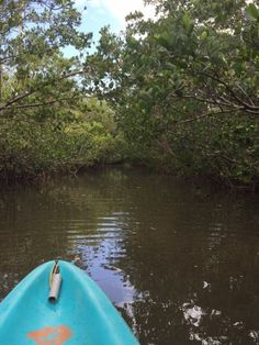 West Lake trail over the lake - Picture of West Lake Trail, Everglades National Park - Tripadvisor Everglades National Park Florida, American National Parks, Lake Pictures, West Lake, Death Valley, World Heritage Sites, Wilderness, Surfboard, Trip Advisor