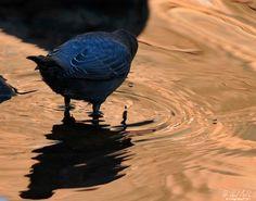 """Feather"" Series | H Hugh Miller #photography #birds Feather Photography, Bird Types, Birds, Fine Art, Animals, Animales, Animaux, Bird, Animal"