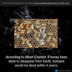 If honey bees were to disappear