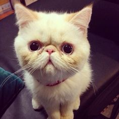 "From @Casper1311: ""Really??? You ate my tangerine??? :'("" #catsofinstagram [catsofinstagram.com] [source: http://instagr.am/p/W4jGJaNUl-/ ]"