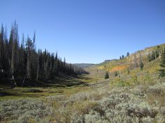 Just three miles east of Scofield Resevoir in Utah, Grandpa's cabin property was full of quakie groves, stands of pines, and valleys of sage brush and wildflowers.