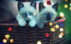 cute cats