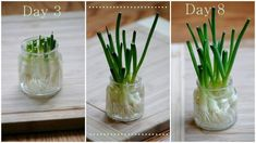 Grow 17 Organic Vegetables from Scraps - You can use common scraps from the kitchen to grow non-GMO plant that is completely organic. The process is very fun. Make sure you use organic plants.