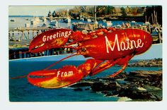 Greetings From Maine - Lobster Postcard Frozen Lobster, Fresh Lobster, Fresh Seafood, Live Maine Lobster, Rock Lobster, Great Places, Places To Go, Lobster Dishes, Lobster Recipes