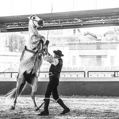 SPANISH HORSES 3