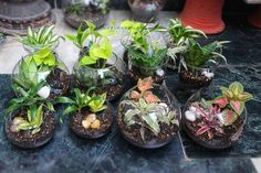 Designer Hand Crafted Terrariums & Potted Plants - Nature In Vogue, New Delhi | ID: 10944174991