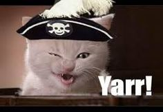 Image result for pirate cat