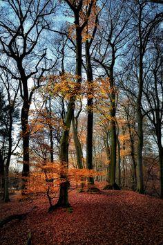 last leaves - null