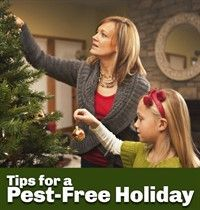 How to decorate for the season without worrying about bugs and rodents