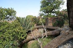 E.Middelburgensis in habitat