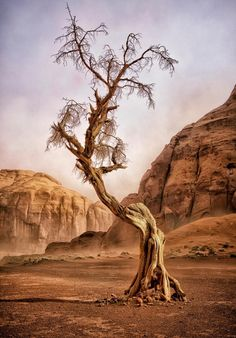 National Geographic Photo Contest 2012 WINDSWEPT LADY---skeletal juniper tree, box canyon in Monument Valley, Arizona. (Photo by Dave Drost/National Geographic Photo Contest)