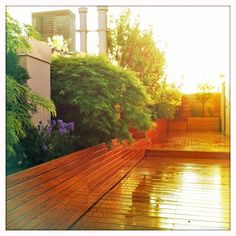 NY garden design featuring a custom-built wood deck and planters dilled with assorted varieties of Japanese maples.