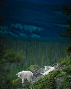 Photo Essay on the Road from Banff to Jasper Canada.  Read more at   matadornetwork.co...
