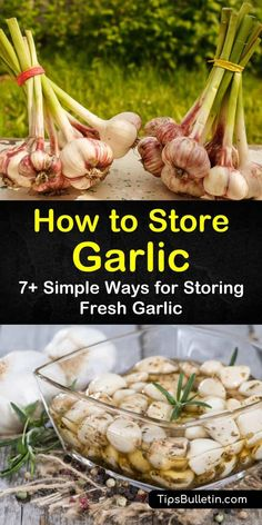 To prevent waste, we want to teach you how to store garlic cloves and bulbs correctly. Learn how to store garlic in kitchen cupboards, in oil, and many other ways to get the most out of your garlic. Fresh Garlic, Roasted Garlic, Preserving Garlic, Preserving Food, How To Store Garlic, How To Preserve Garlic, Garlic Storage, Garlic Recipes, Garlic Ideas