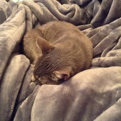 #cat #MistyMoo #MistyMooOfMedfordMA