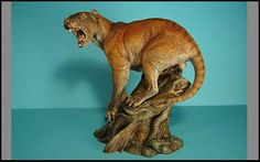 "Thylacoleo Carnifex: the Marsupial ""Lion"" in Animal Face Off Forum"