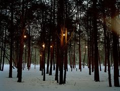 Cathedral Pines lighting the path