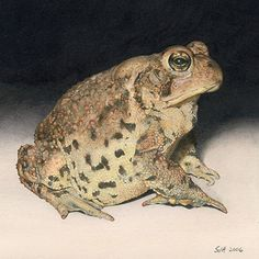 """Hector by Sue deLearie Adair Watercolor and Colored Pencil ~ 6"""" x 6"""""""