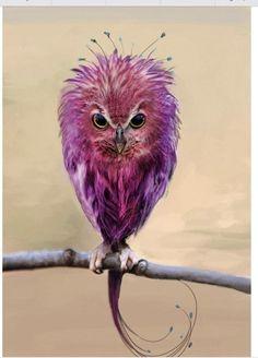 Don't call me an owl! I'm an Easter egg born in an owl body. Exotic Birds, Colorful Birds, Green Birds, Purple Bird, Exotic Animals, Purple Rain, Beautiful Owl, Animals Beautiful, Pretty Birds