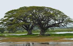 Yaala National Park - Sri Lanka via panoramio.com