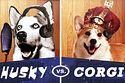 Rap Battle: Husky Vs. Corgi