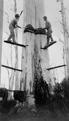 1914 Cutting down a blue gum near Budgeree. VicRoads Centenary 1913-2013.