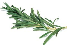 Rosemary is an aromatic herb that has been widely used in Mediterranean cuisine. The leaves are used as a flavoring in foods. It has a very…