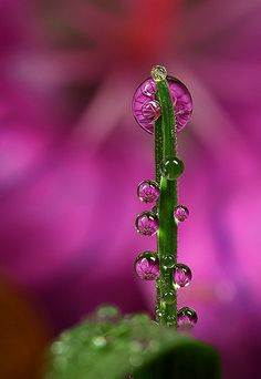 Dew Drop Refractions