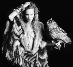 hip chic + owl