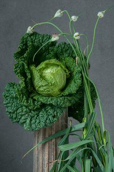 Savoy Cabbage and Garlic Buds