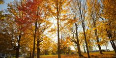 Newsflash: Fall foliage is a-comin' our way! You have roughly six weeks to enjoy the crisp colors, and we know exactly how you should make that happen.  Behold -- Yankee Magazine's ridiculously cool foliage predictor and map that will tell you wher...