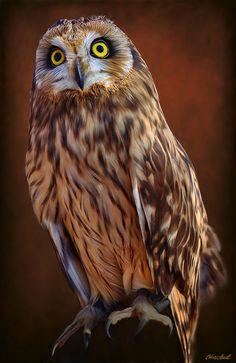 Spirit Guide Owl