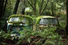 Could you imagine coming across this in the forest? #Volkswagen #Nature #Beauty #Classics #RustinPeace