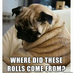Omg lol if pugs didn't have wrinkles then they wouldn't be as cute