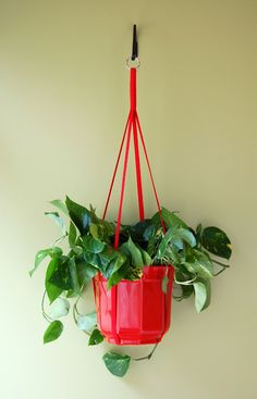 hanging plant for the sun room