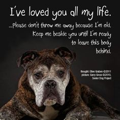 Love your dog as much as he loves you!