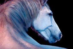 /Statuesque Wild Horses Photos by Andrew McGibbon
